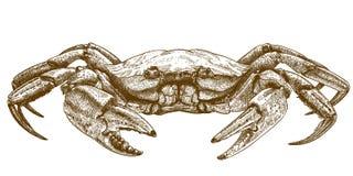 Illustration gravure à l'eau-forte de crabe illustration de vecteur