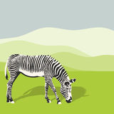 Illustration of grazing zebra. Royalty Free Stock Images