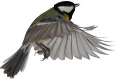 Illustration with isolated yellow great tit in flight stock images