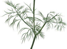 Illustration with green dill isolated on white Royalty Free Stock Photo