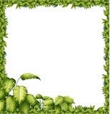 A green frame Royalty Free Stock Photos