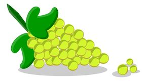 Illustration of green grape Stock Photography