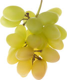 Illustration with green grapes isolated on white Stock Images