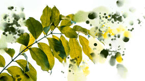 Illustration green leaf Watercolor style - Stock Image Royalty Free Stock Photography