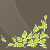 Illustration of green leafs. Vector vector illustration