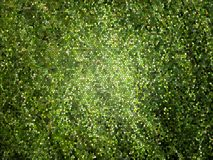 Green mosaic background. It is an illustration of the green mosaic background Royalty Free Stock Images
