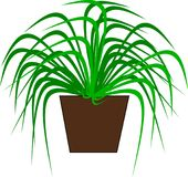 A green potted plant for decoration. An Illustration of a green potted plant for decoration in rooms Stock Illustration
