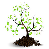 Illustration of the Growth of a Young Tree Royalty Free Stock Photos