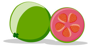 illustration of guava fruit Stock Photos