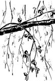 Illustration of hand drawn birch branch isolated on white stock photo
