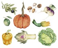 Illustration of Hand drawn vegetable collection Stock Images