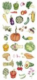 Illustration of Hand drawn vegetable collection Royalty Free Stock Photos