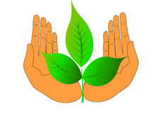 Illustration of the hand green nature Stock Photo