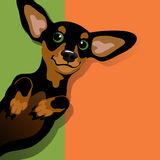 Illustration of a happy playful Dachshund. Illustration of a happy playful black and tan Dachshund on his back. Space for text. For posters, cards, banners stock illustration