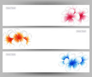 Illustration  of Hawaii flower Frangipani, colorful Plumeria  brochure template. Stock Photos