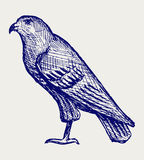 Illustration hawk royalty free illustration