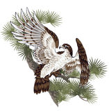 Illustration of hawk,. I drew a pine and a hawk in the technique of the Japanese traditional painting Stock Photos