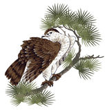 Illustration of hawk,. I drew a pine and a hawk in the technique of the Japanese traditional painting Stock Images