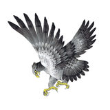 Illustration of hawk,. I drew a pine and a hawk in the technique of the Japanese traditional painting Royalty Free Stock Photos