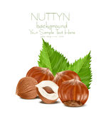 Illustration of hazelnut kernels Royalty Free Stock Photography