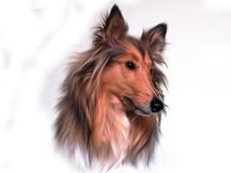 Illustration of collie dog Stock Photography