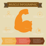 Illustration of health lifestyle infographic in flat designed Royalty Free Stock Photos