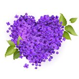 Illustration of a heart filled with lilac flowers. Illustration of a heart made from small flowers of lilac, on a white background. Green leaves on the edges of Stock Photos