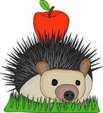 Illustration Hedgehog carry red apple on the back. Vector Illustration Cute Hedgehog carry small red apple on the back and passing through the grass Stock Photography