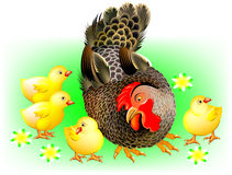 Illustration of hen and chickens on a meadow. Royalty Free Stock Photos
