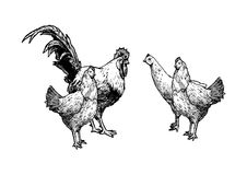 Illustration of hens and cock Stock Photography