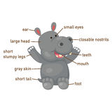 Illustration of hippo vocabulary part of body. Vector Royalty Free Stock Photography