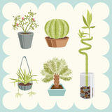 Illustration of Home Plants. Illustration of Various Home Plants Royalty Free Stock Photos