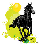 Illustration of a horse Royalty Free Stock Photos
