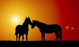 Horses. Illustration of horses on sunset background stock illustration