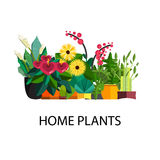 Illustration of houseplants, indoor and office plants in pot. Stock Photos