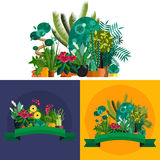 Illustration of houseplants, indoor and office plants in pot. Royalty Free Stock Image