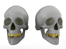 Illustration humaine de crânes illustration stock