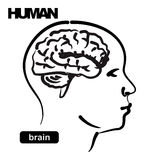 Illustration of human Stock Photos