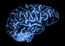 Illustration of a Human Brain Royalty Free Stock Photography