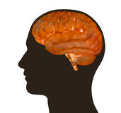 Illustration of human brain and male profile Royalty Free Stock Photos