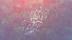 Illustration of a Human Brain Royalty Free Stock Photo