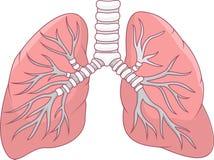 Human lung stock illustration