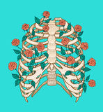 Illustration of human rib cage with roses. Line art style. Boho vector Royalty Free Stock Photo