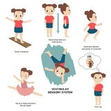 Illustration of human senses. Vector illustration of human senses. Vestibular sensory system: sense of balance, maintaining head and body posture, direction and stock illustration