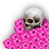 Illustration of human skull on heap of desert rose Royalty Free Stock Image
