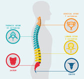 Illustration of human spine Stock Photo