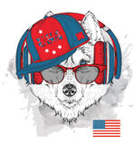 Illustration of husky in the glasses, headphones and in hip-hop hat with print of USA. Vector illustration. Royalty Free Stock Photos