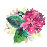 Illustration of Hydrangea flowers Royalty Free Stock Photos