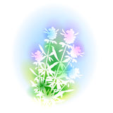 Illustration With Hyssop Bunch Royalty Free Stock Photo