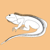 Illustration of iguana in black and white colors on a colored ba Royalty Free Stock Images